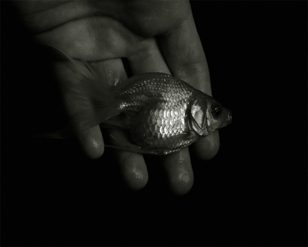 A Fish In Hand