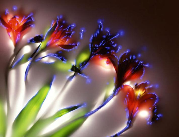 Shocking Floral Photographs