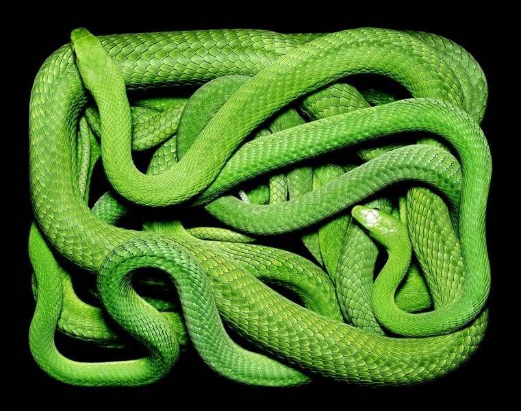 Photographs Of Snakes Like You've Never Seen Before