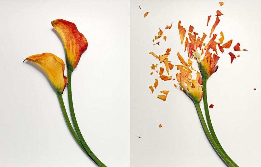 Freeze Flowers, Smash Flowers, Photograph Flowers