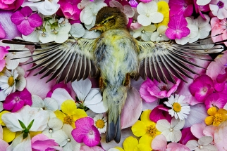 """Natura Morta"" Series Explores Life and Death Through Colorful Memorials to Deceased Animals"