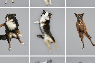 Ever Wondered What It Would Look Like If Dogs Could Fly?