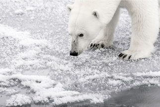 """""""Off The Beaten Track"""" in Svalbard - Photographing Melting Ice, Polar Bears, and More"""