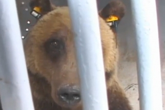 "Interactive Documentary ""Bear 71"" Includes Video and One Million Photos"