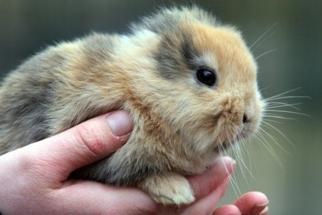 [News] Photographer Kills, Rare, Earless, Mutant Rabbit