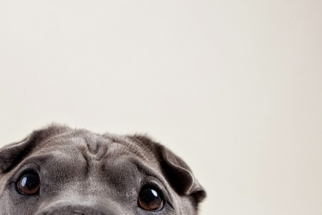 12 Awesome Dog Portraits By Susan Sabo