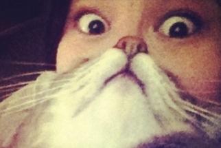 Cat Beards: The Latest Funny Photo Trend Involving Cats