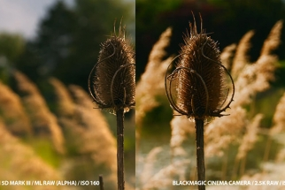 Raw Comparison: Magic Lantern Canon 5D VS Black Magic Cinema Camera