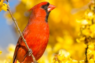 Tony Northrup Shares Tips For Capturing Close Up Bird Photographs