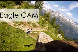 Stunning POV GoPro Video Emerges of Eagle In-Flight
