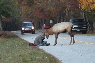 Photographer Has A Close Encounter With An Elk