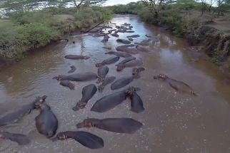 A Beautiful Aerial View Of The Serengeti Taken With A Remote-Controlled Drone