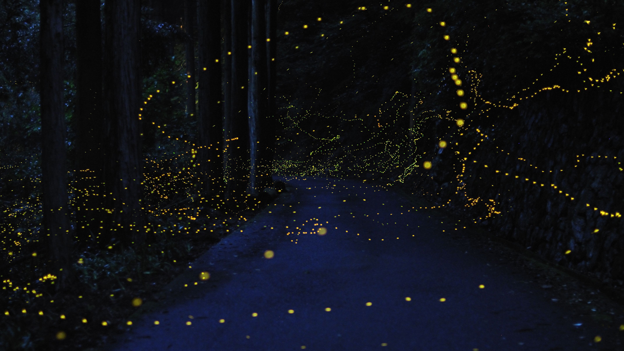 [Pics] Long Exposure Images Of Lightning Bugs In Japan ...