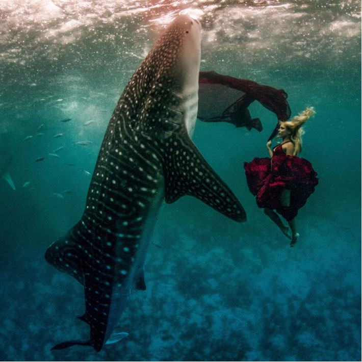 fashion whale shark shoot and Shawn heinrichs 2