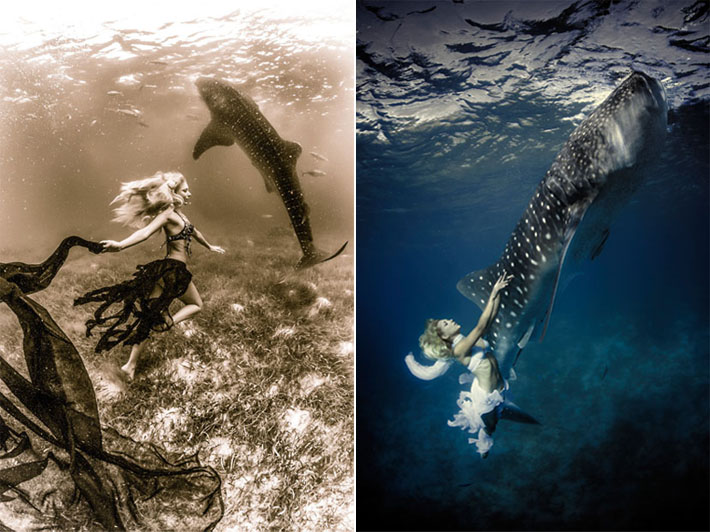 fashion whale shark shoot and Shawn heinrichs