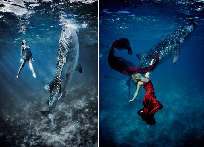 fashion whale shark shoot and Shawn heinrichs3