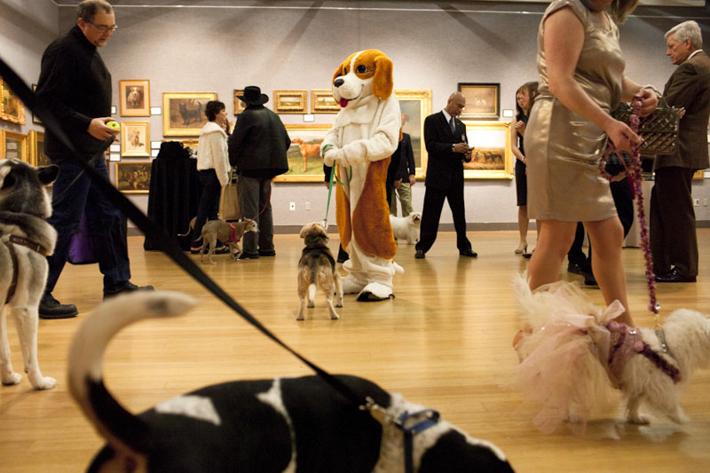 20110213_Dog_Show_0624