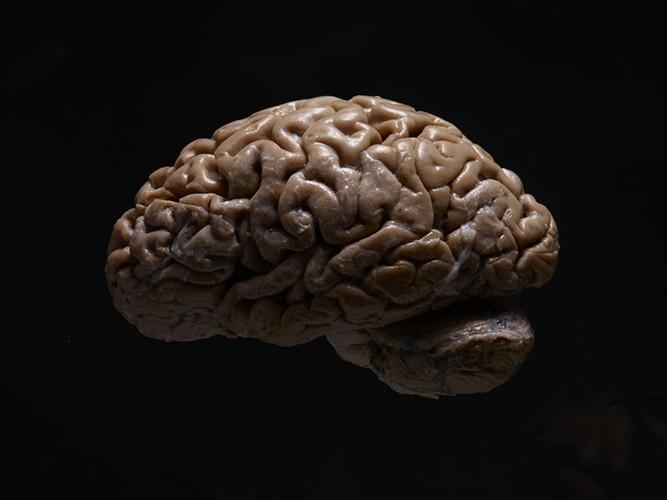 AdamVoorhes_Brains01