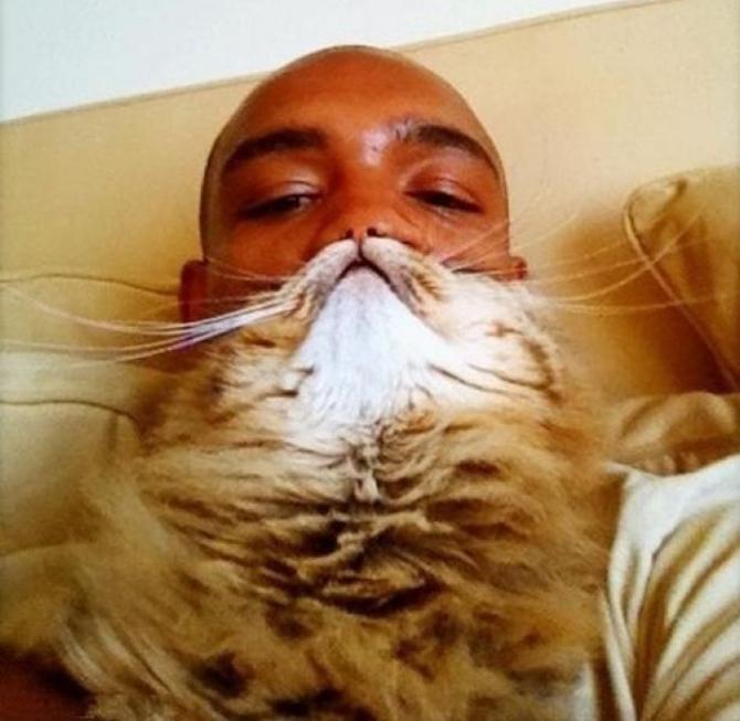 catbeards10