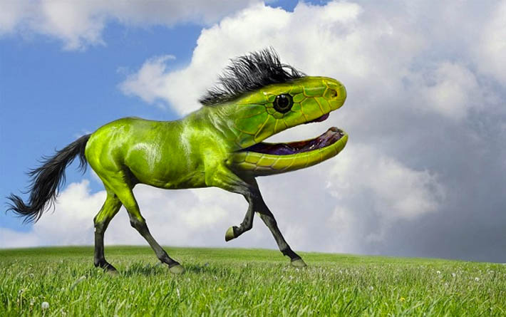 photoshop animals together new species-8