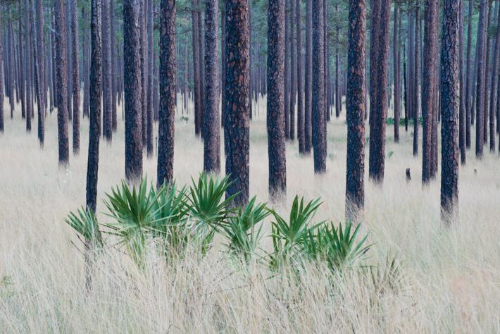 Florida Wildlife Corridor Expedition