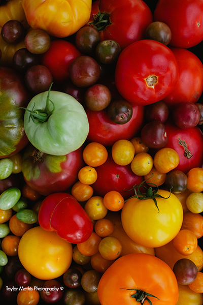 tomatoes_variety