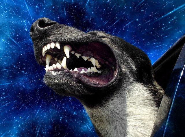 warp-dogs-1