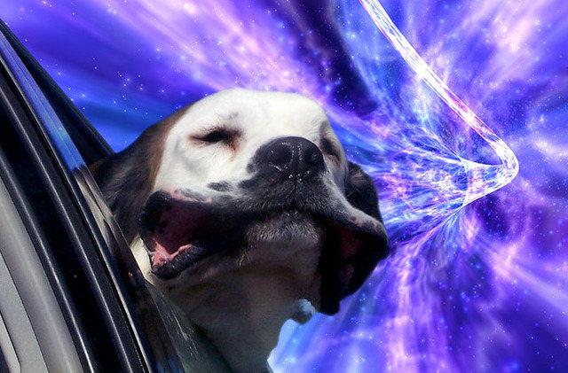 warp-dogs-6