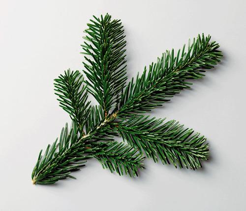 tree unorg