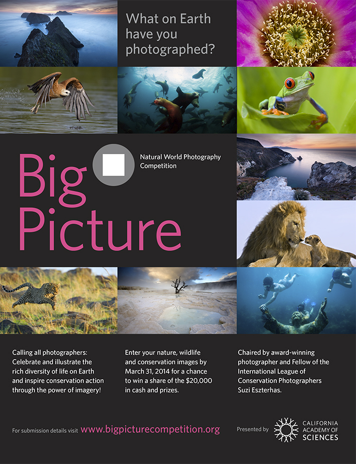 big picture photo competition