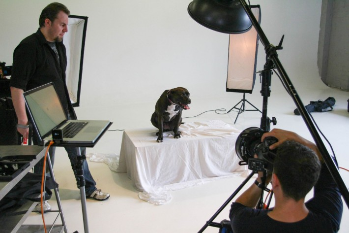 BTS photo of my dog portrait setup. Ring light on my Phase One, overhead beauty dish, and two strip lights behind