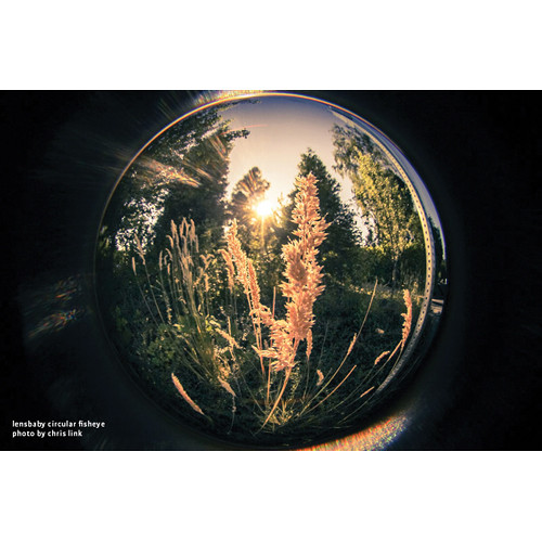 lensbaby fisheye photo by chris link woods