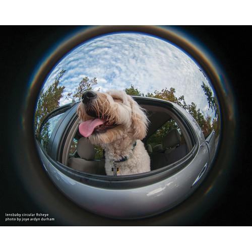 lensbaby fisheye photo by joye ardyn durham dog