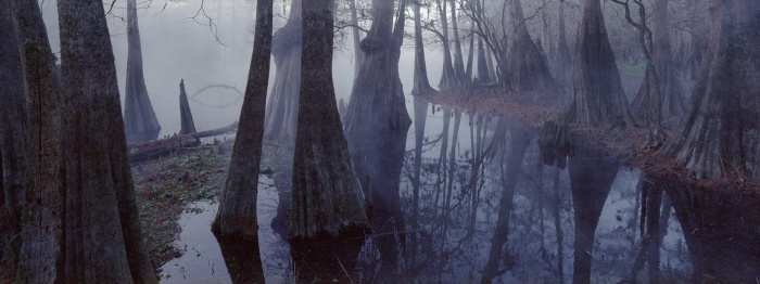 Glaser-Springs-Swamps-7